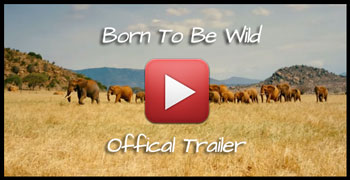 born to be wild trailer