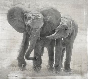 friends  Sheldrick