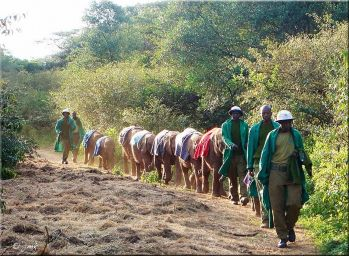 DSWT back from the bush
