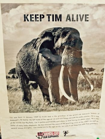 Keep Tim Alive