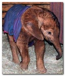 david sheldrick wildlife trust 3